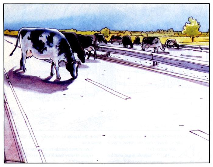 Etienne Davodeau Rural